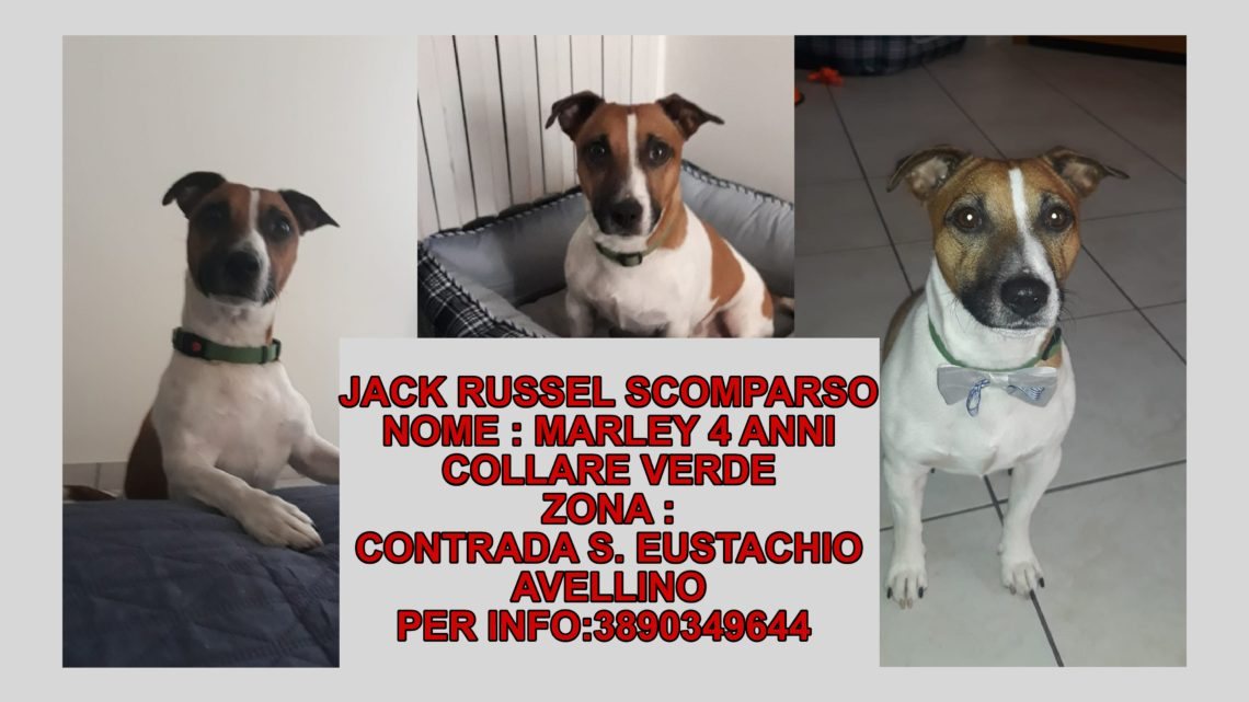 SCOMPARSO JACK RUSSEL: L'APPELLO DEI PROPRIETARI